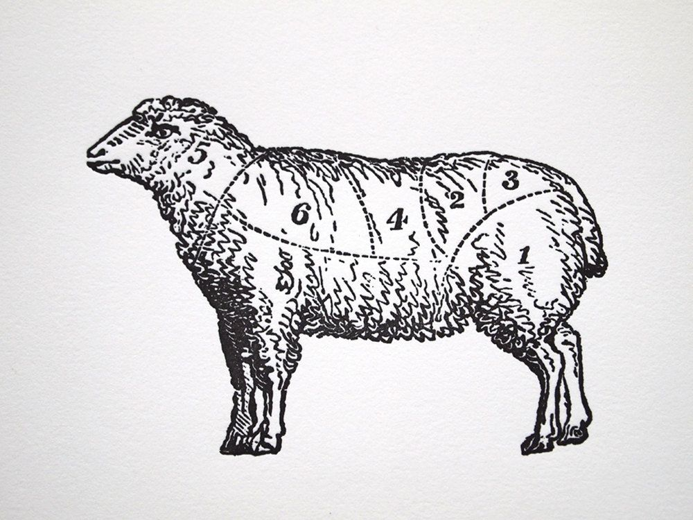 Vintage Lamb Drawing