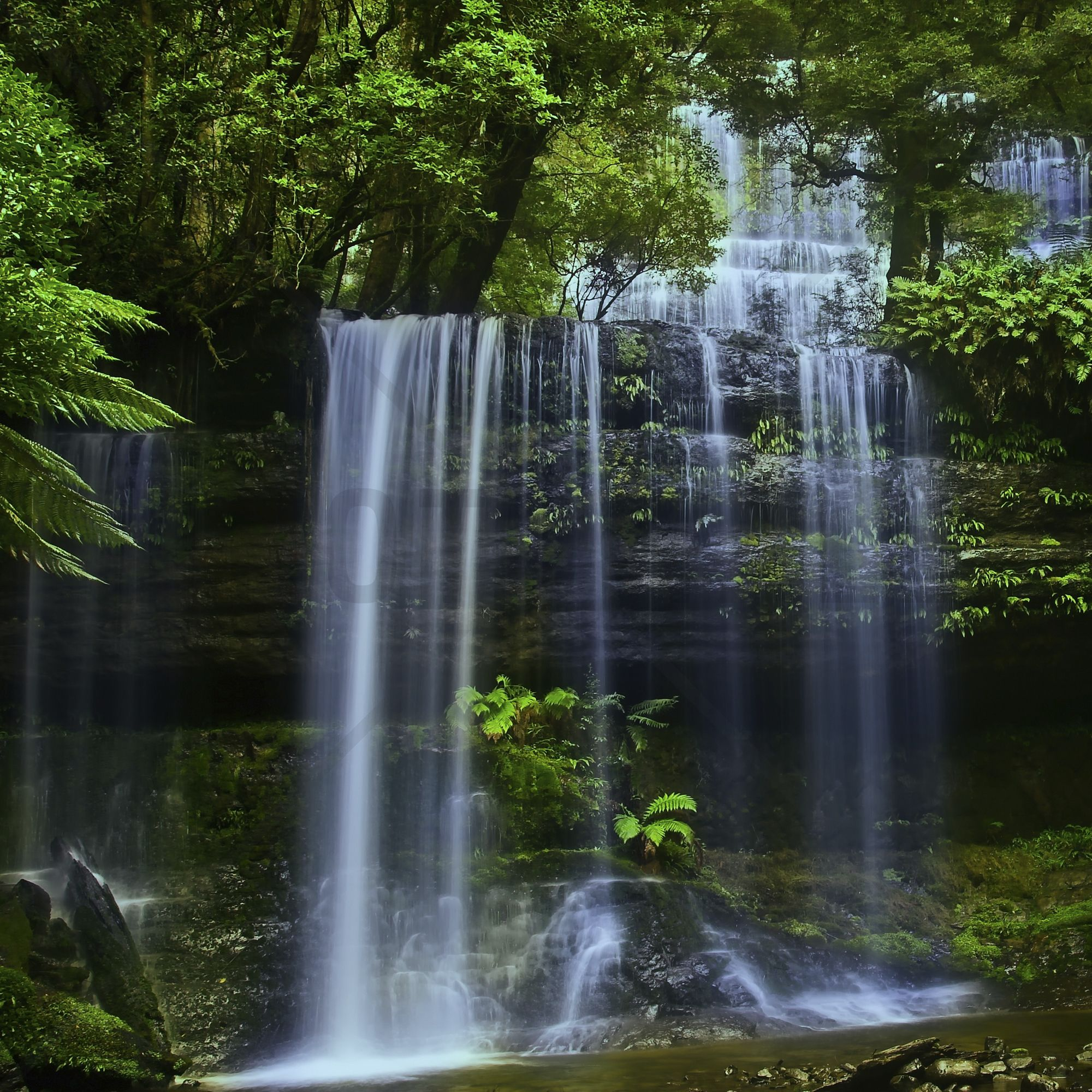 Tasmania Waterfall Wall Mural u0026 Photo
