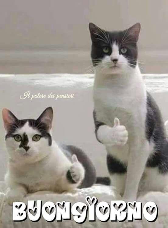 Buongiorno buon giorno gatos animales e gatos graciosos for Buongiorno con gattini