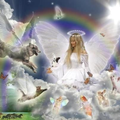 Rainbow Bridge angel … | Dog angel, Rainbow bridge, Animals friends