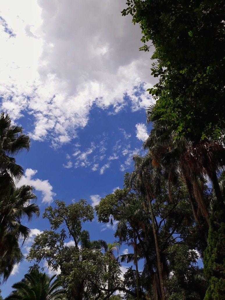 Jardim Da Luz Fotografia De Paisagem Fotografia Do Ceu Paisagem Vintage