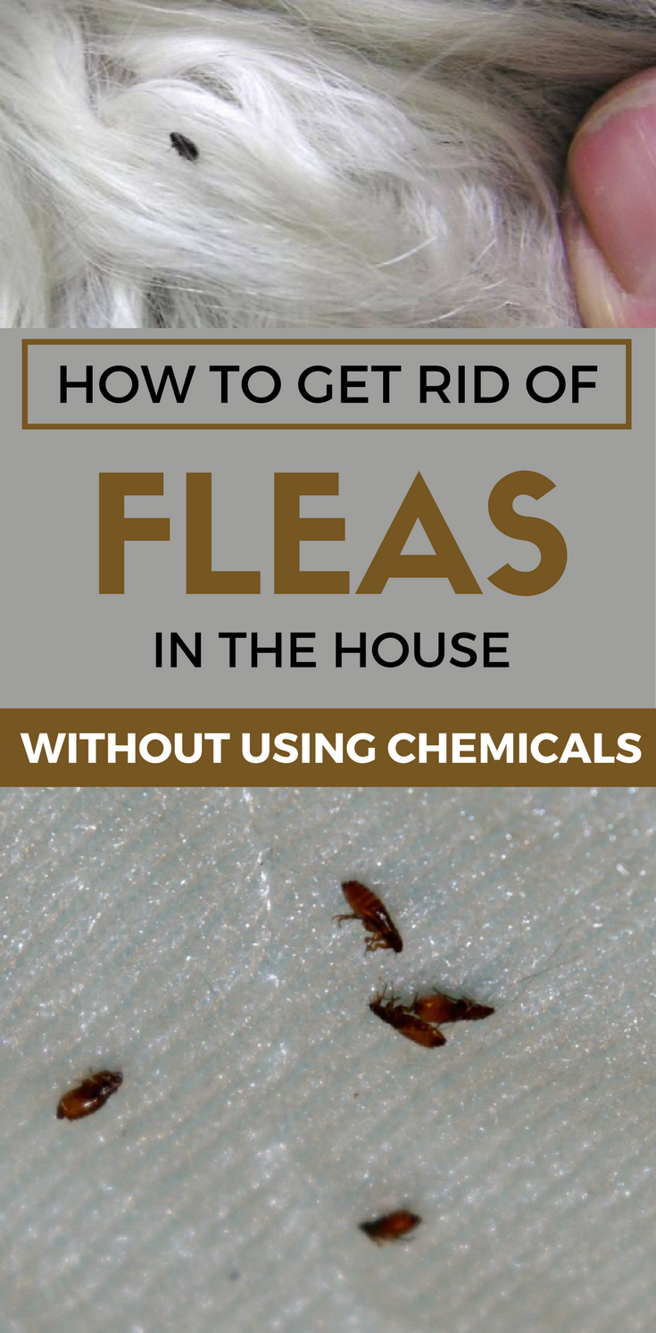 bde9b2ab91ad827415876710b08b6bd0 - How To Get Rid Of Fleas Without Spending Money