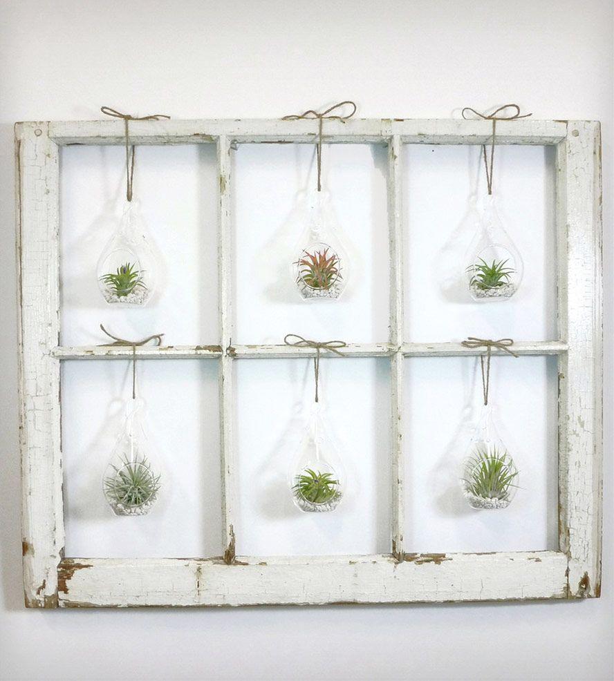 Window frame terrarium 6 pane home decor roots in - Diy pflanzenwand ...