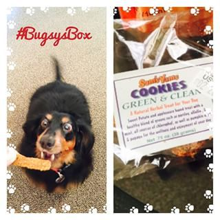 #BugsysBox make dogs go crazy! We had to share with Lily too! @bugsysbox #Review coming soon! #JustPlumCrazy #PlumCrazyPets