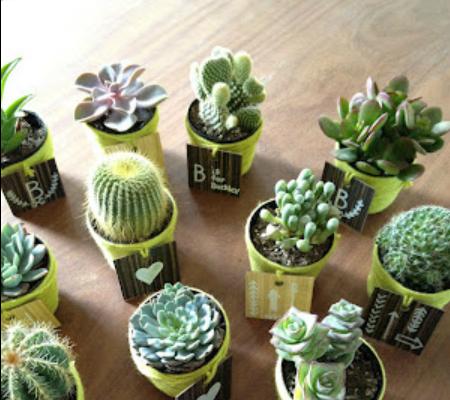 Recuerdos De Bautizo Con Cactus.Mini Cactus Para Souvenirs De Baby Shower Manualidades