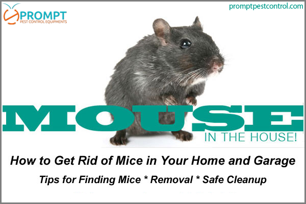 21 Easy And Inexpensive Ways To Get Rid Of Rats Mice And Similar Rodents Getting Rid Of Rats Getting Rid Of Mice Rats