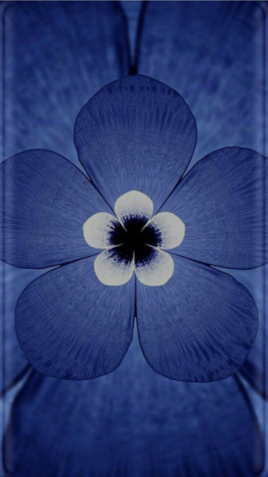 Blue Flower Wallpaper Pink And Flowers Wallpaper Wallpaper