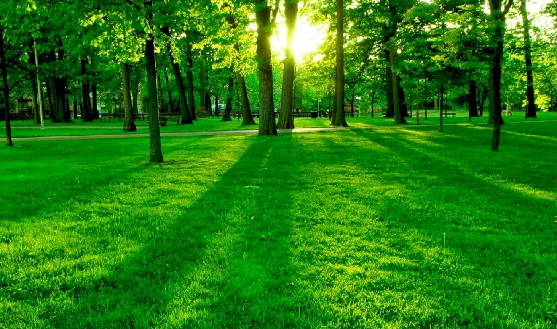 Ext Tree Park Large Episodeinteractive Episode Size 1920 X 1136 Episodeourcrazylovel Green Nature Wallpaper Hd Nature Wallpapers Beautiful Nature Wallpaper
