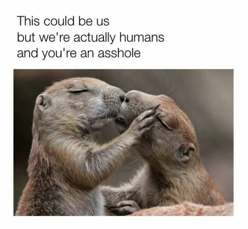 62 Savage Memes To Start The Weekend Animals Kissing Cute Animals Funny Animals