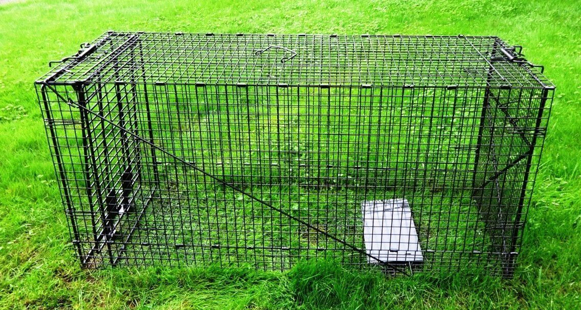 Humane Way 914050 Live Animal Trap Xlarge 50x19x24 See This Great Product This Is An Affiliate Link Dogdoorsgatesram Animal Traps Live Animals Giant Dogs