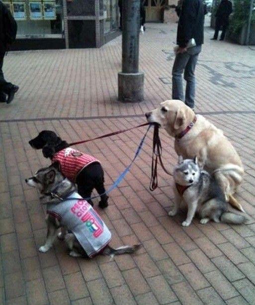 Perro cuidando a sus amigos.