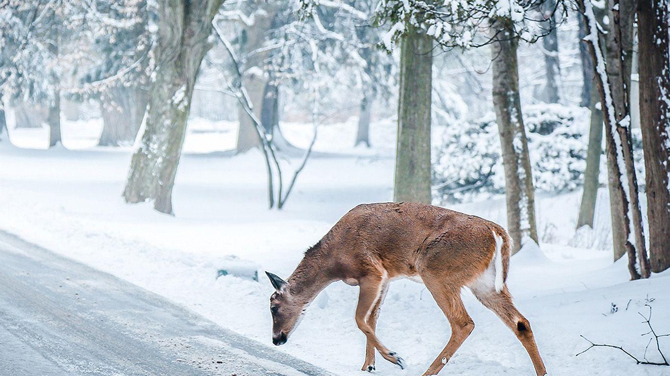 Nb25 Christmas Deer Street Snow Winter Nature Animal Winter Nature Android Wallpaper Vintage Animals