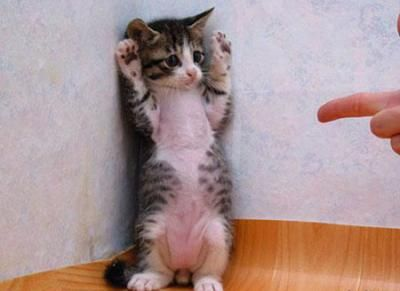kitten being held up - Google Search