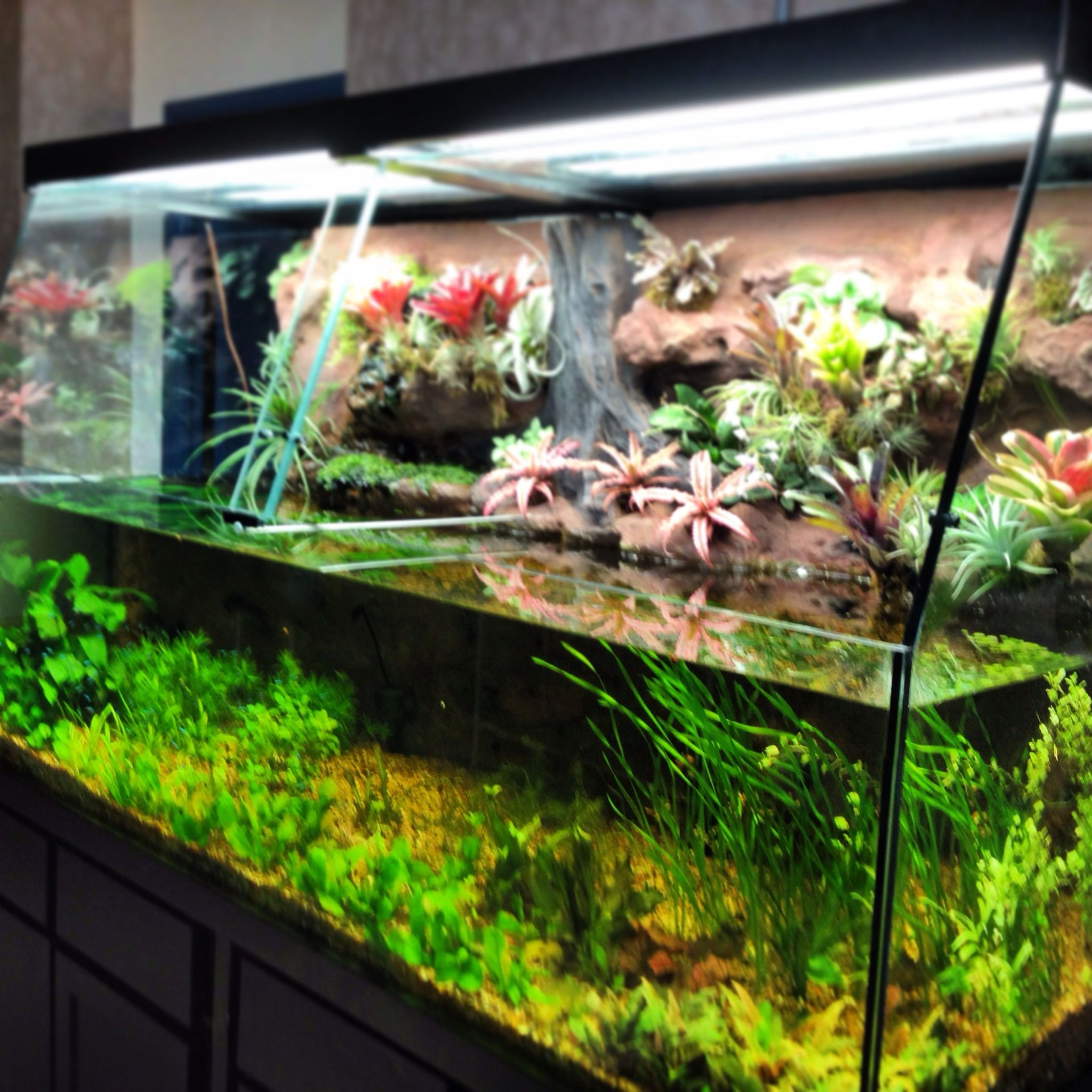 A tropical oasis aquarium paludarium water garden for Aquarium fish for pond
