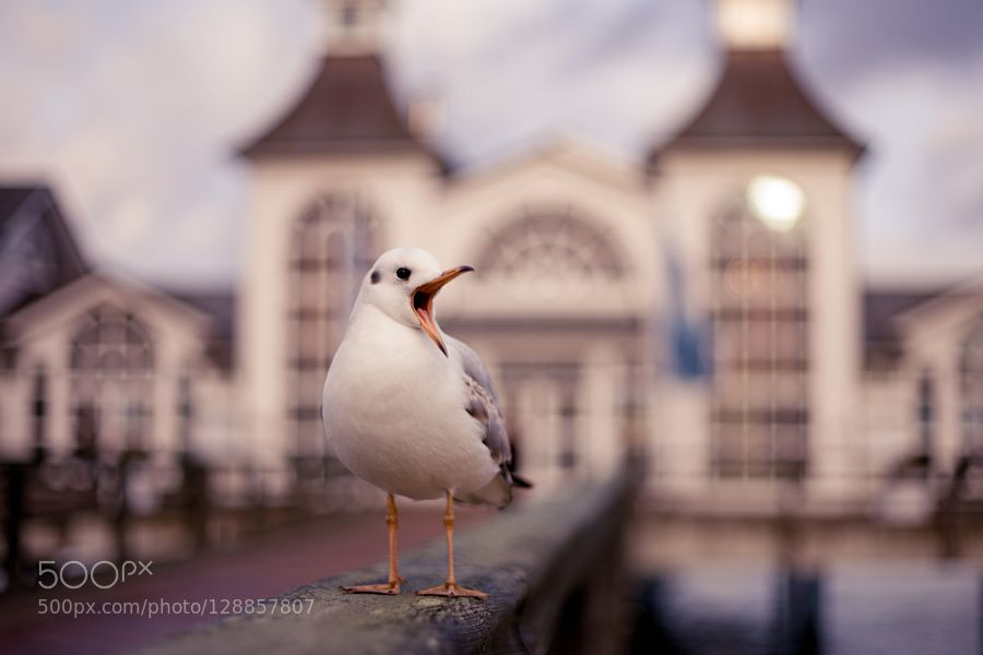 troublemaker  by catha_wirth #animals #pets #fadighanemmd