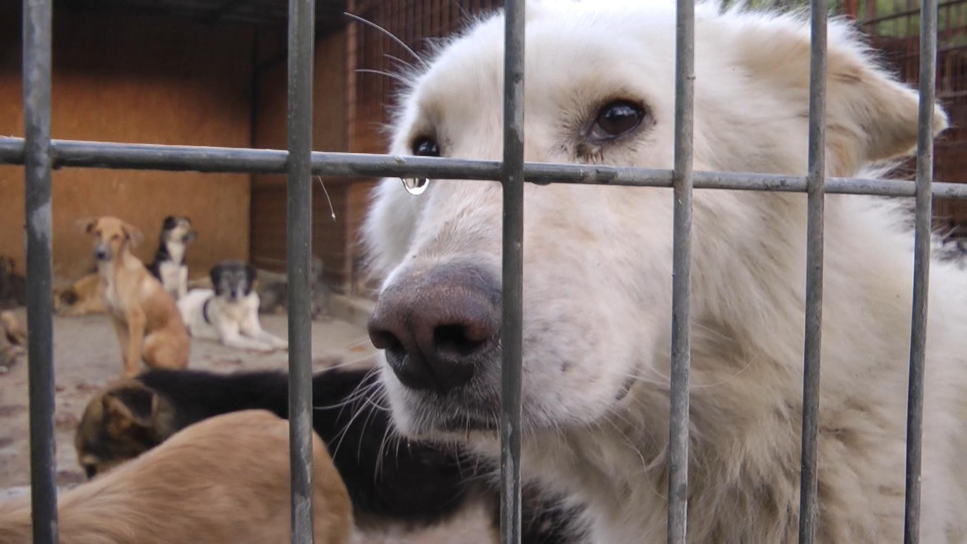 Hundeleben Ein Film Uber Das Schicksal Rumanischer Strassenhunde Startnext Com Hunde Tierheim Tiere In Not