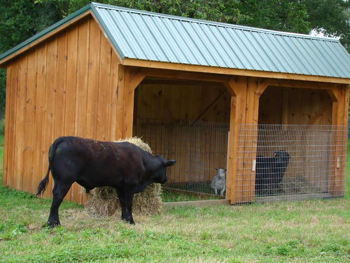 Log Cow Shelters This Is A Well Constructed Economical