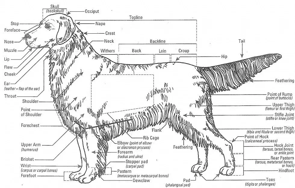 Learning Lounge Furst Class Lounge In 2021 Dog Anatomy Dog Club Dogs