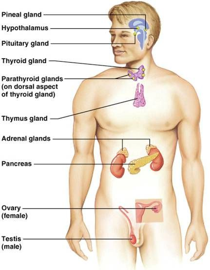 Thymus Thyroid Hypothyroidism News And Research Endocrine