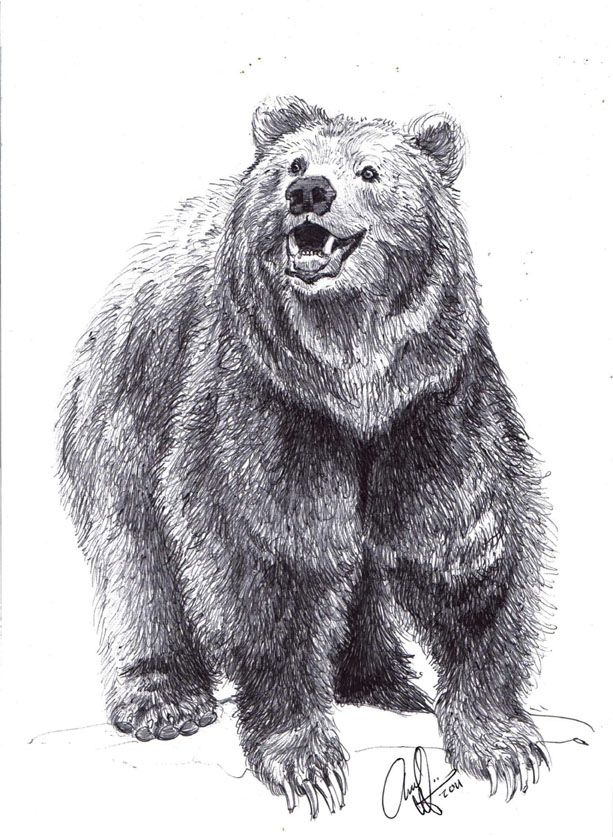 Drawing a bear... Standing Grizzly Bear Drawings Realistic ...