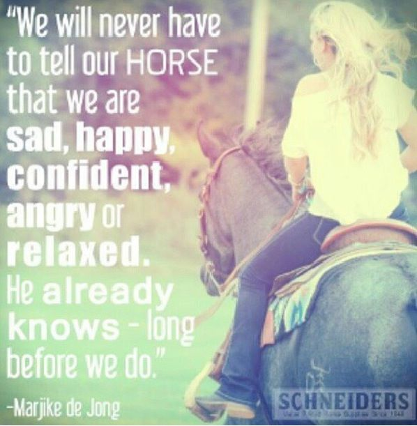 Don't even try to fool your horse they sum you up before the halter goes on. Come correct.
