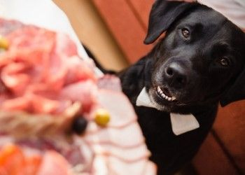May seem a special treat to share your Thanksgiving feast with your pets, but some Thanksgiving food can be harmful to your cats or dogs. Holiday pet foods