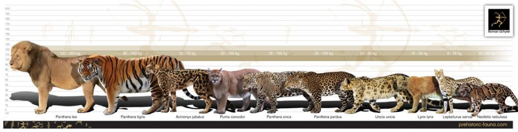 prehistoric bengal