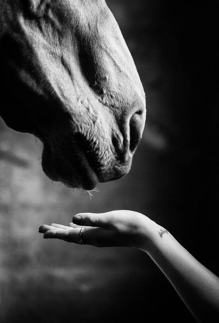 """suche verbindung , [seeking connection """"Suche nach Verbindung"""" Fotografie von Jen M... - Pferde -   #"""