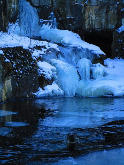 Satu Ylävaara Portfolio : Hylje hyisessä talven ihmemaassa
