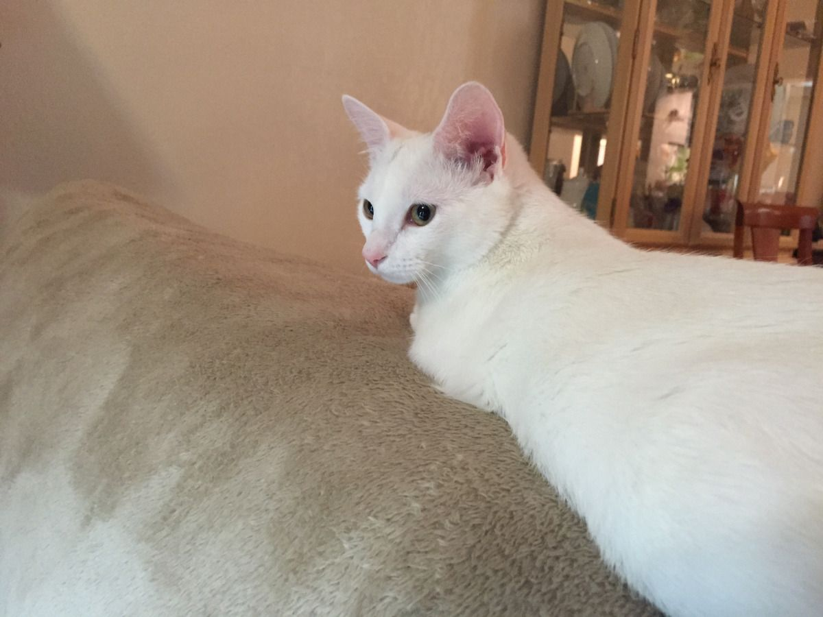 What S My Cat S Real Age A Chart For Pet Owners Pet Owners Pets Cats