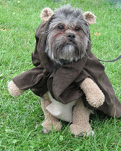 14 Dogs Dressed Like Ewoks Animals With Crap On Their Heads