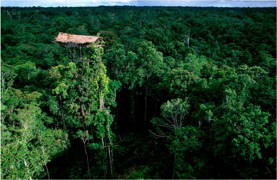 """Floresta Amazônica, Brasil...... Maior floresta tropical do planeta, distribuída entre Brasil, que tem sua maior parte, e sete outros países da América do Sul como Colômbia, Peru e Equador, a Amazônia é conhecida como o """"pulmão do planeta"""", num imenso refúgio para inúmeros animais de todo tipo."""