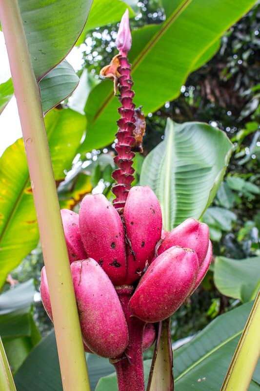 What To Expect On An Ecuador Amazon Tour With La Selva Lodge