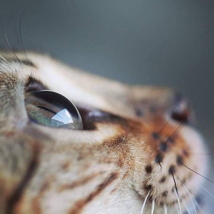Beautiful Quot Katzen Susse Katzen Ausgestopftes Tier
