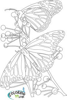 Butterfly Fantasy Coloring Butterflies Bugs Colouring Pages