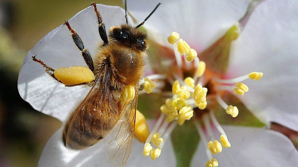 Health Canada proposes ban of bee-killing neonicotinoid pesticide via /r/worldnews https://t.co/QuRwoQb7tv https://t.co/pqbdPZtMuJ