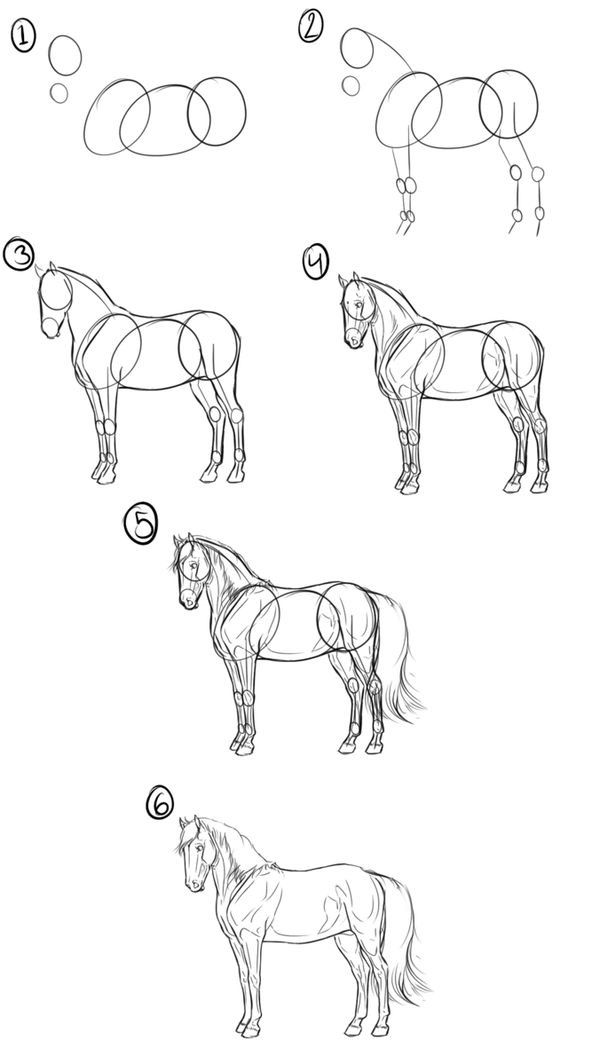 Photo of Step-by-step tutorial for drawing a horse. This uses the basic shape technique w…