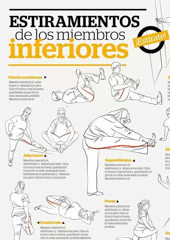 Contemporáneo Más Bajas Notas Anatomía De Las Extremidades Foto ...