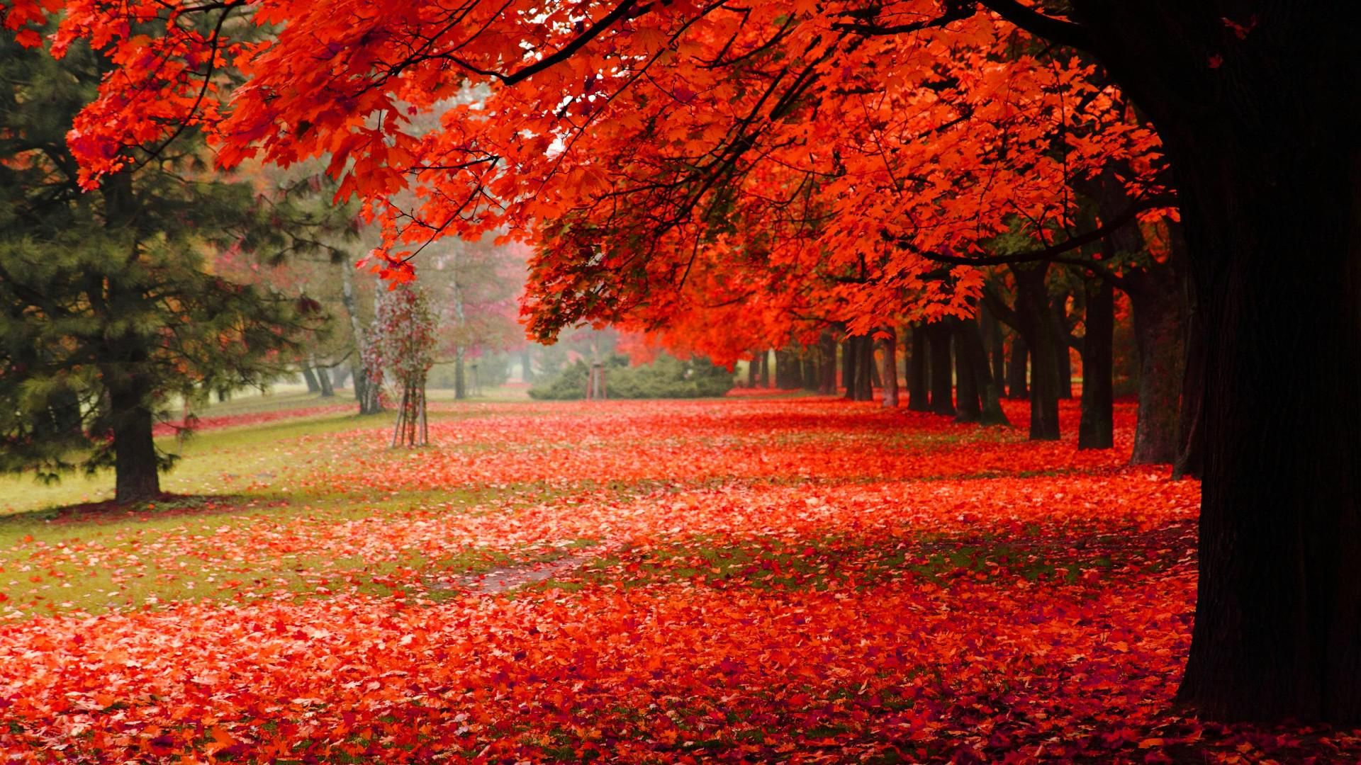 Natural Park Autumn Red Leaves Autumn Scenery Hd Hd Scenery Wallpaper Hd Nature Wallpapers Nature Wallpaper