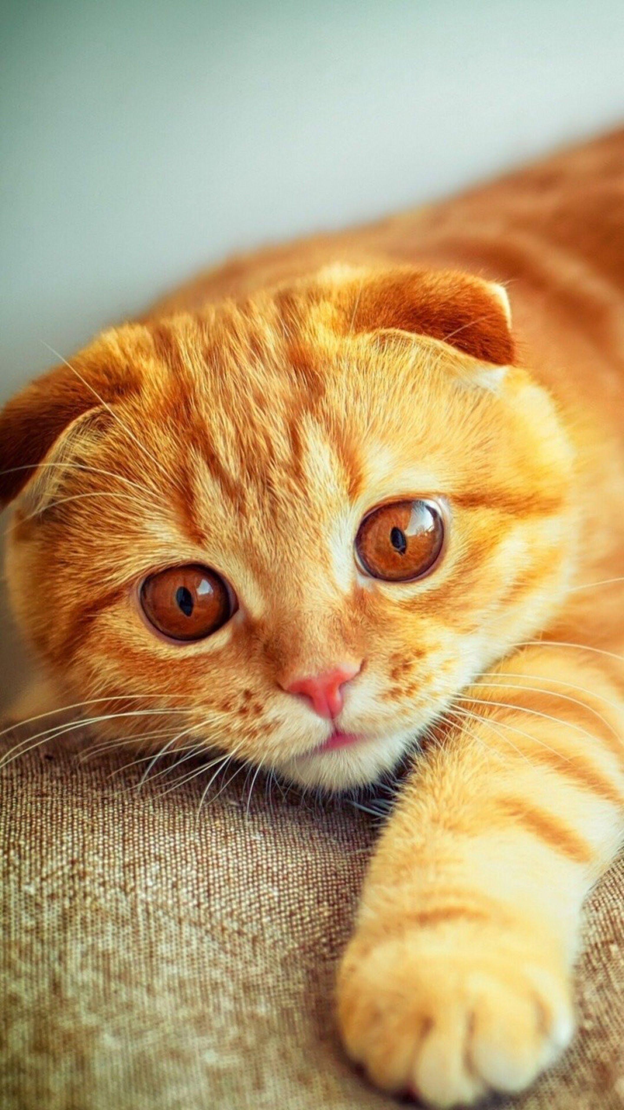 языка картинки кошек на телефон конечно эти руины