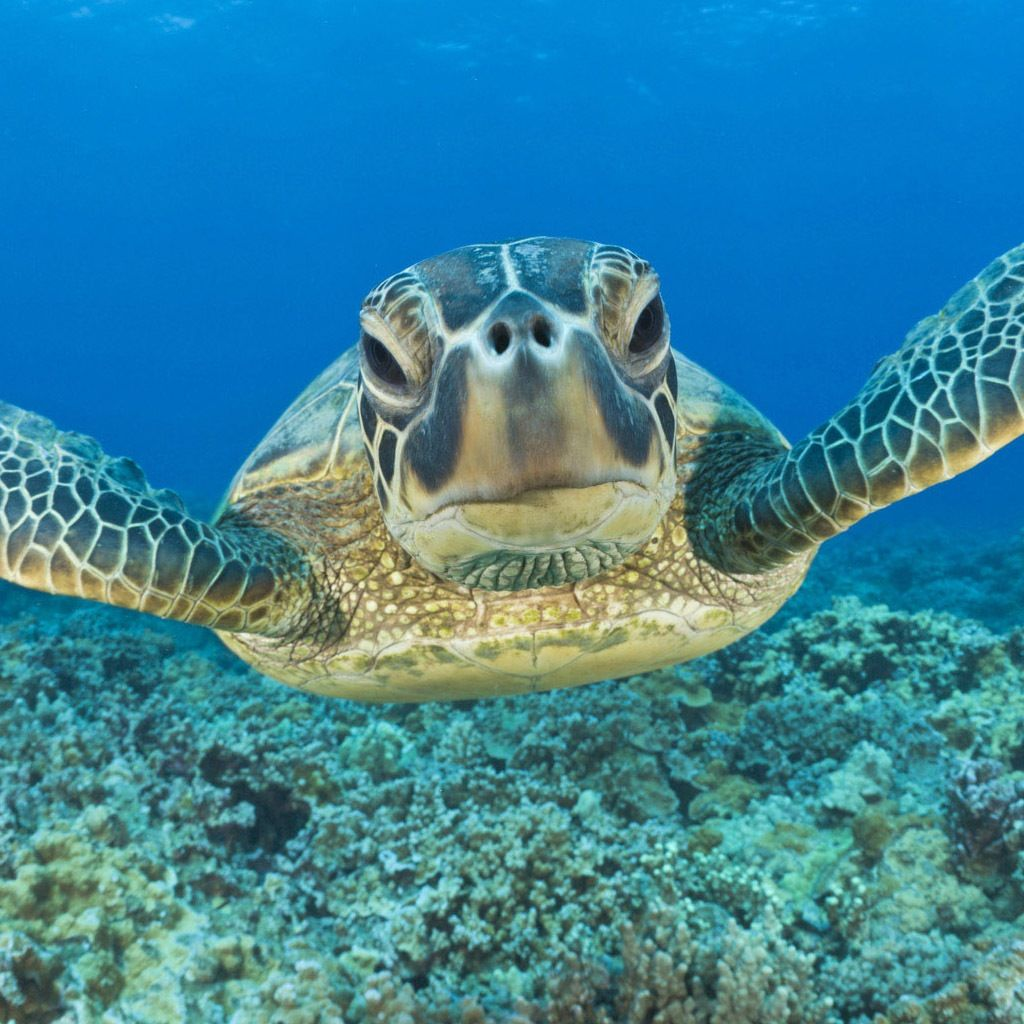 Under the sea.. Sea turtle wallpaper, Underwater animals
