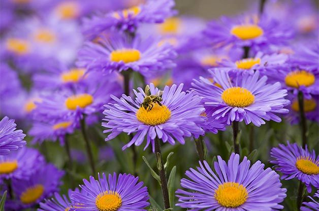 10 Plants For Bees And Other Pollinators Gardening Birds Blooms Magazine Planting Flowers Plants Fall Flowers Garden