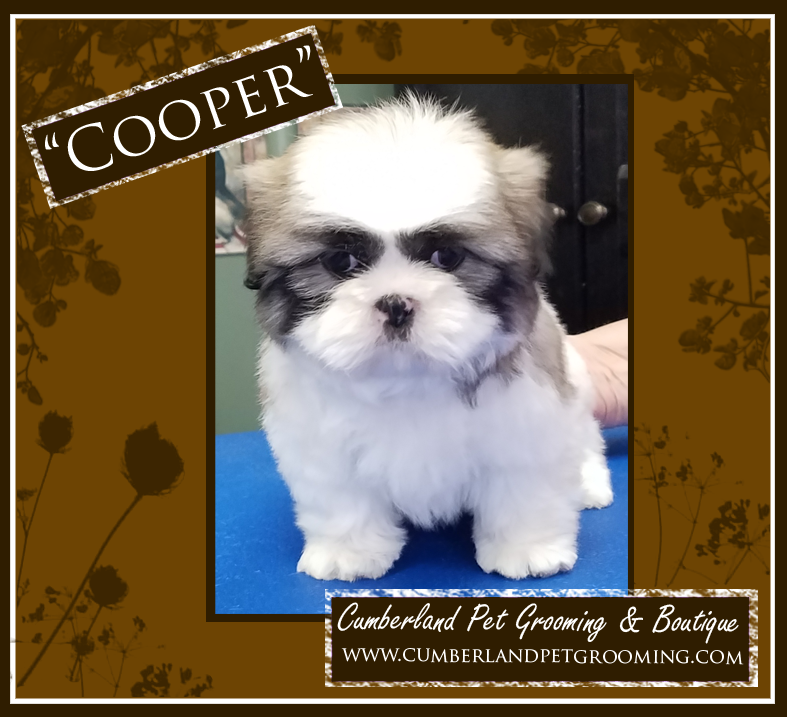 Cooper Had His Very First Grooming Today We All Wanted To Steal
