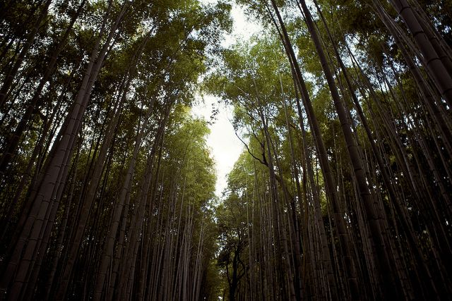 bamboo forest kyoto japan guide