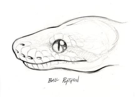 anaconda head | animal | Pinterest | Serpientes, Dibujo y Dibujos ...