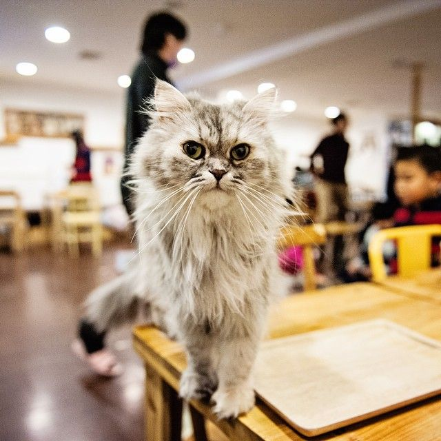No visit to Korea is complete without spending time at a cat cafe. #AdoramaU