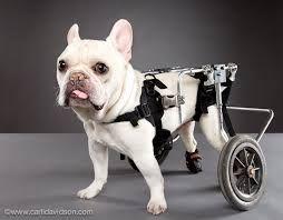 Resultado De Imagen De Discapacidades Fisicas Silla De Ruedas Para Perro Mascotas