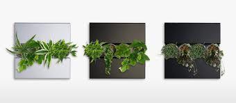 jardin vertical cuadros vivos - Triptico