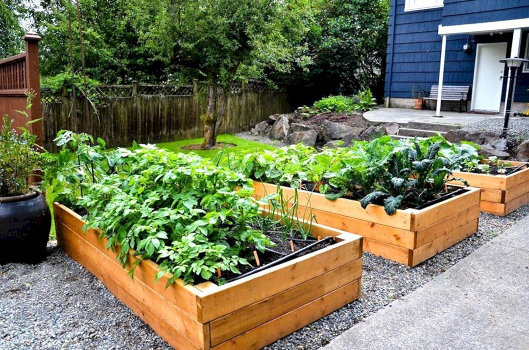 15 fascinating fruit and vegetable garden ideas you need on 54 Without Planning In A Beautiful Gardening id=40226