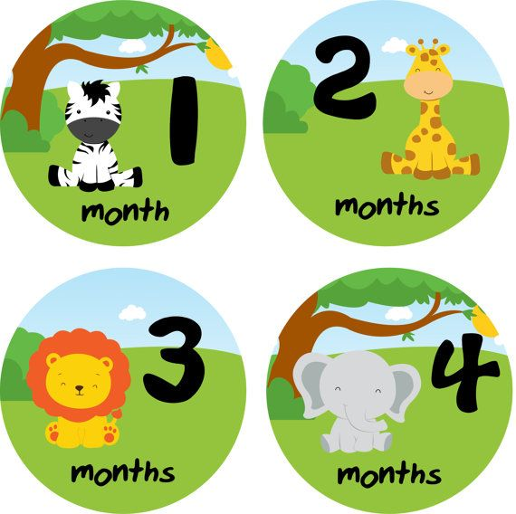 Baby month stickers baby monthly stickers by for Stickers pared bebe